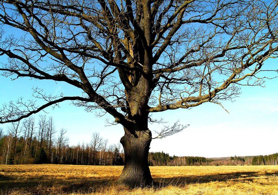 Drzewa w wierzeniach ludów tradycyjnych